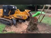 Travaux de rognage de souches d'arbres toutes essences et toutes tailles de souche