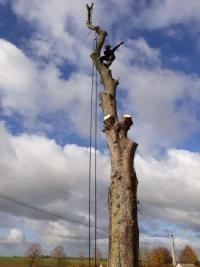 Démontage d'arbre avec rétention, intervention en grande hauteur au Neubourg