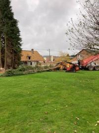 Abattage d'une cépée de tuyas sur le secteur de Louviers dans l'Eure