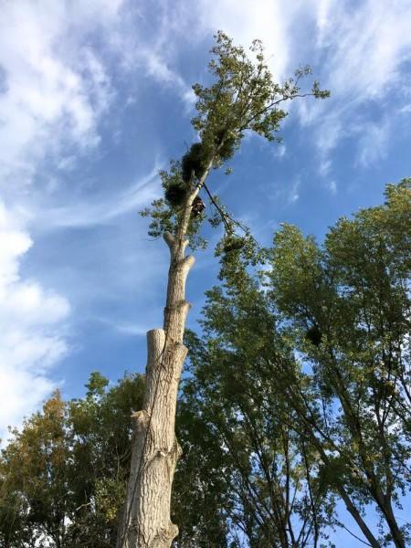 Elagage arbre Evreux