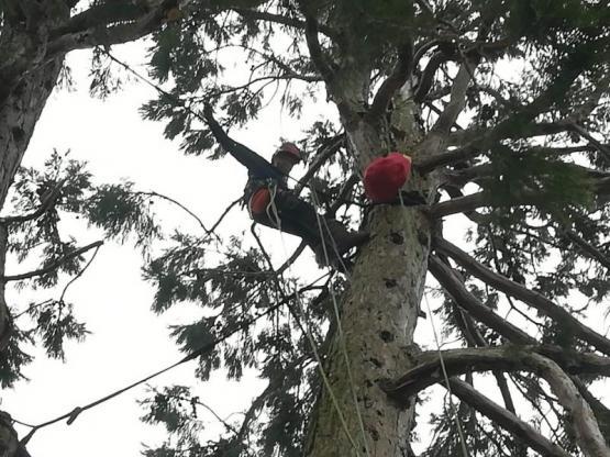 Abattre arbres Evreux